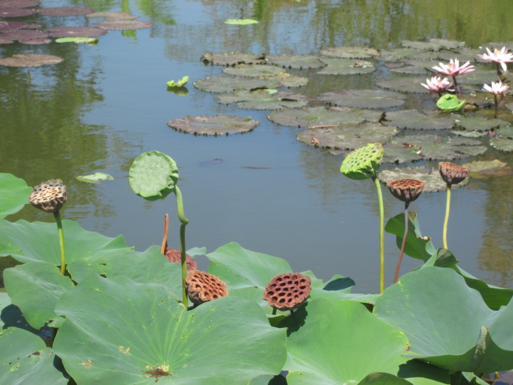 I think these seedpods are worth straining out across the pond to get a better look, don't you?