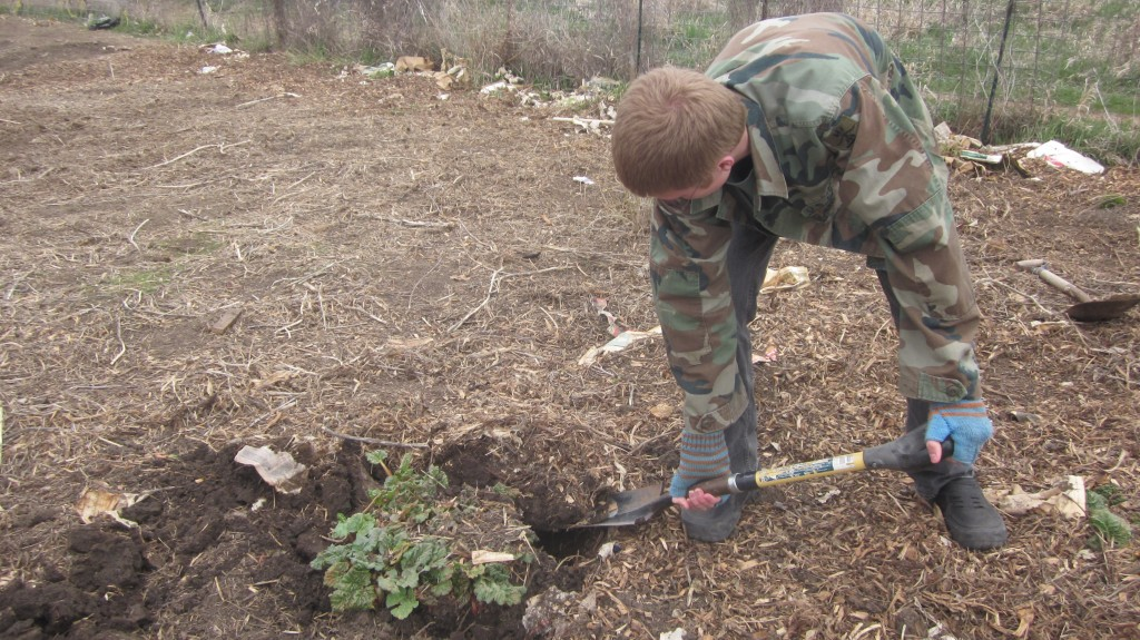 For Timothy, digging up the plant was easy as 1 . . .