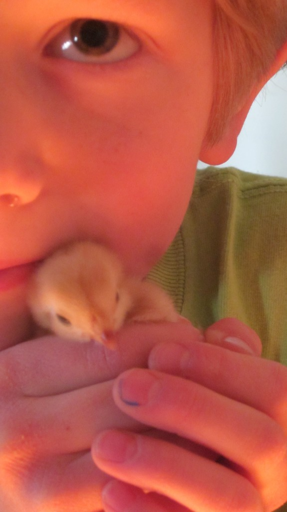 This little chick is going to get lots of loving.
