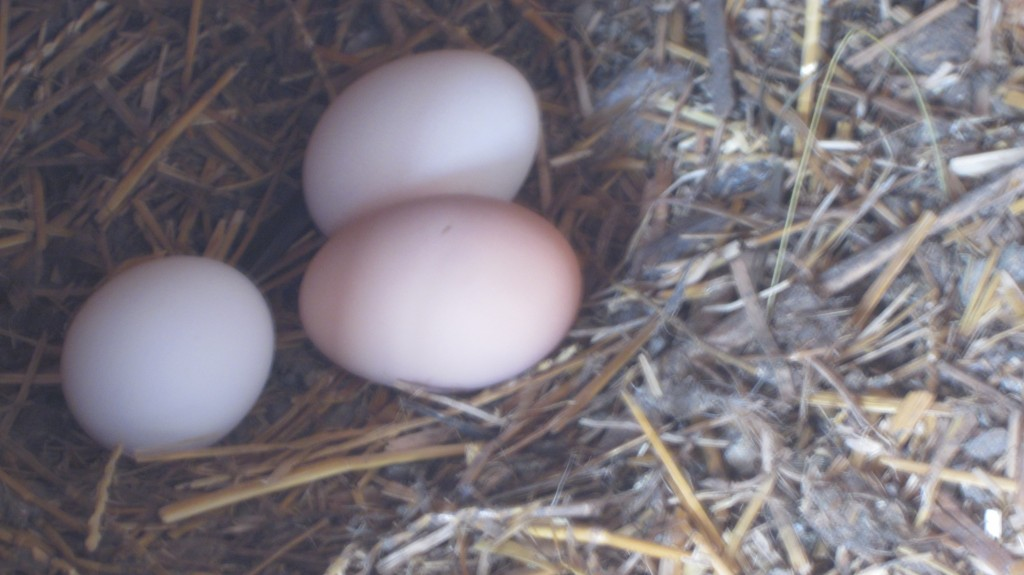 I've always thought the hens laid better when the coop was tidy.