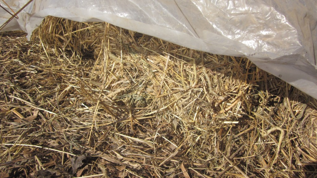I'm in love with my pile of mulch hay, but it has to have a sauna before I use it . . .