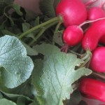 Wait–don't throw those radish leaves away! Make soup, instead!