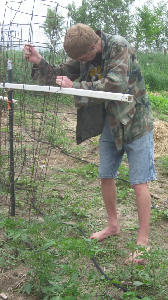 Here Timothy is weaving the piece of PVC through the cages.