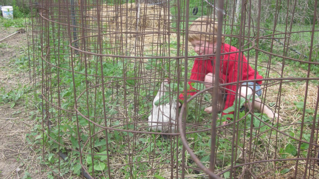 What we see as a sturdy tomato-cage fortress, Babes sees as a maze handy for eluding capture.