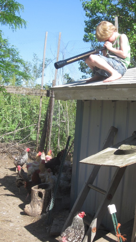 """I catch sight of little Mack up on the chicken coop roof: """"Just doing some chicken-gazing, Mom."""""""