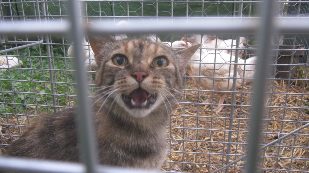 """Our cat Merry:  """"What the heck--you're using MY FOOD for bait?"""""""