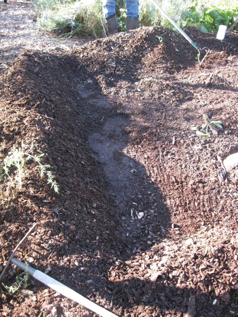 Here's the trench, empty now of all potatoes.