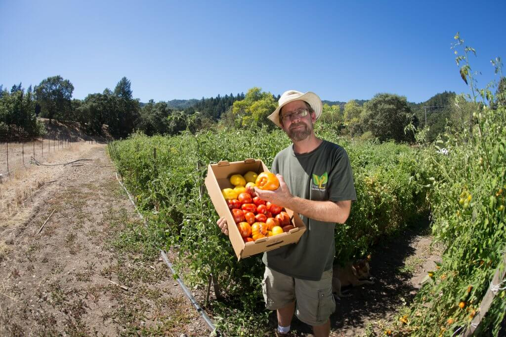 Brad Gates in field, box of tomatoes in arms