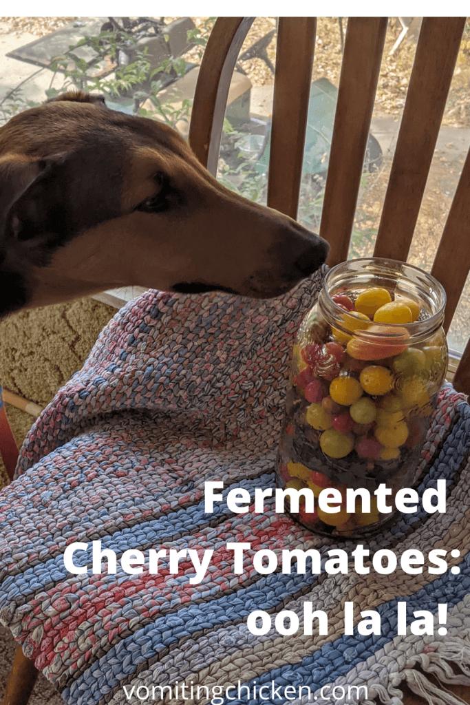 dog & cherry tomatoes
