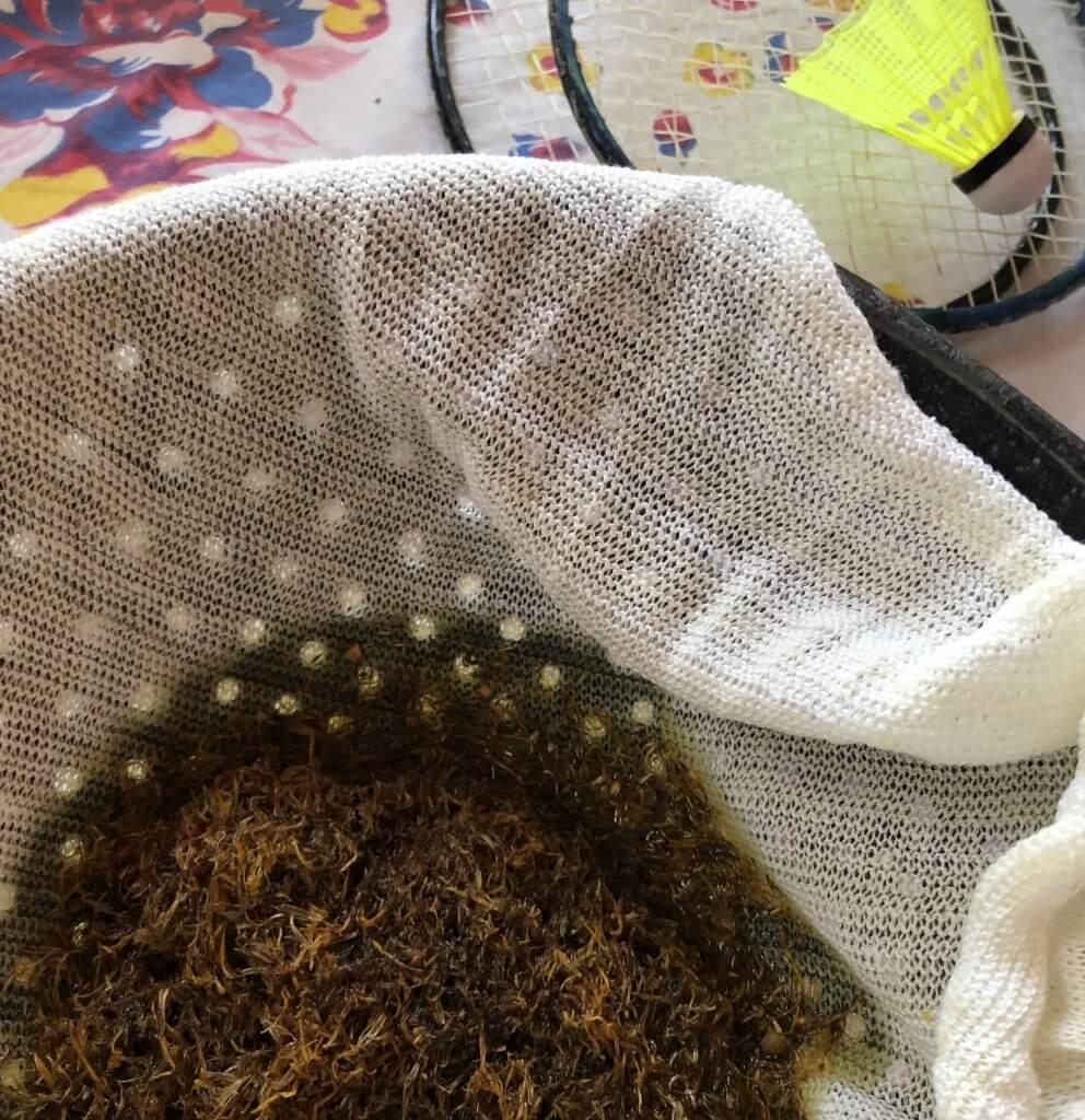 calendula draining in collander