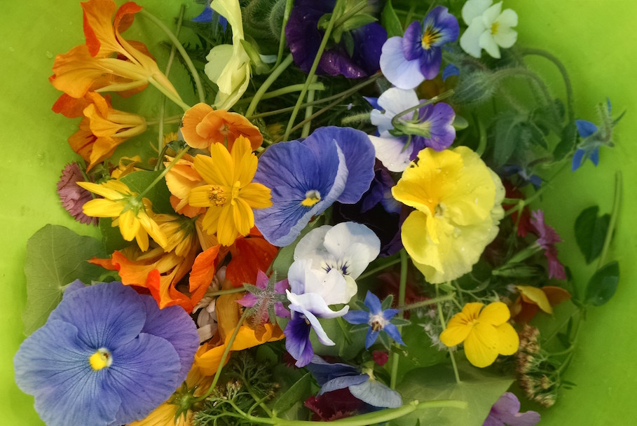 A bowlful of edible flowers, picked early one morning to fill an order.