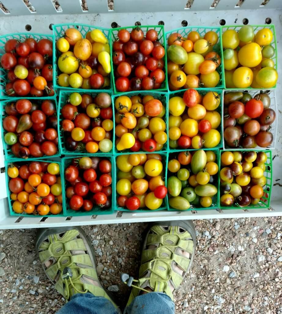 big flat of cherry tomatoes of many colors