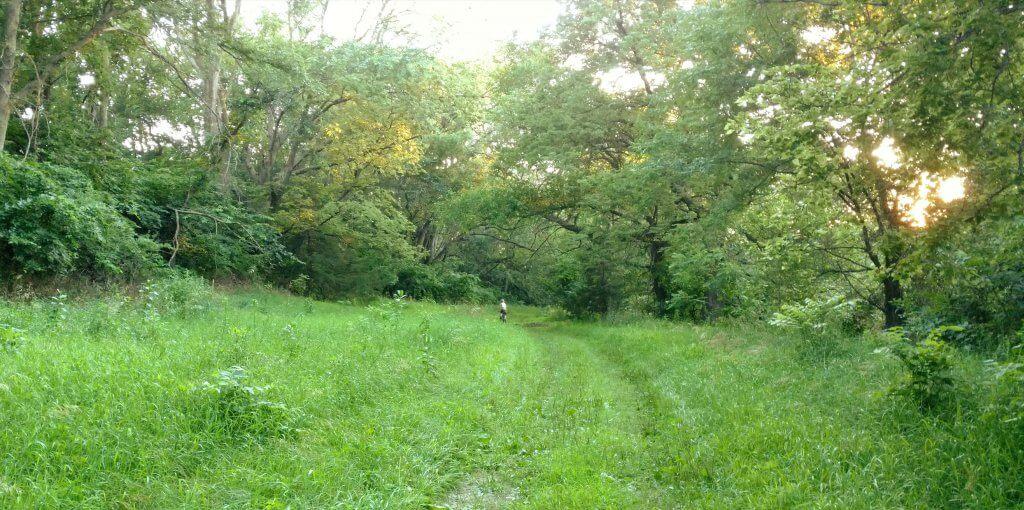 grassy path with biker