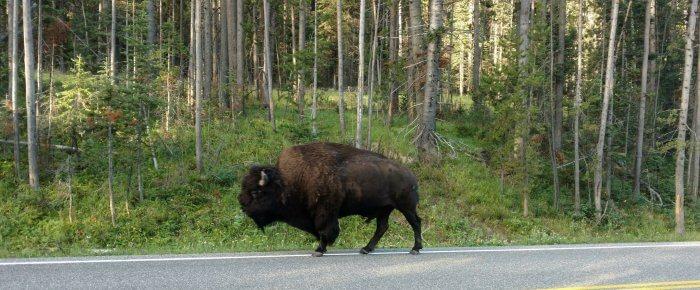 7 Super Cool Reasons to Visit a Supervolcano: Yellowstone Nat'l Park