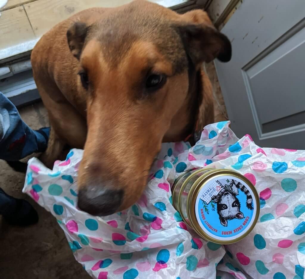 dog and Coon Creek Herbs tin