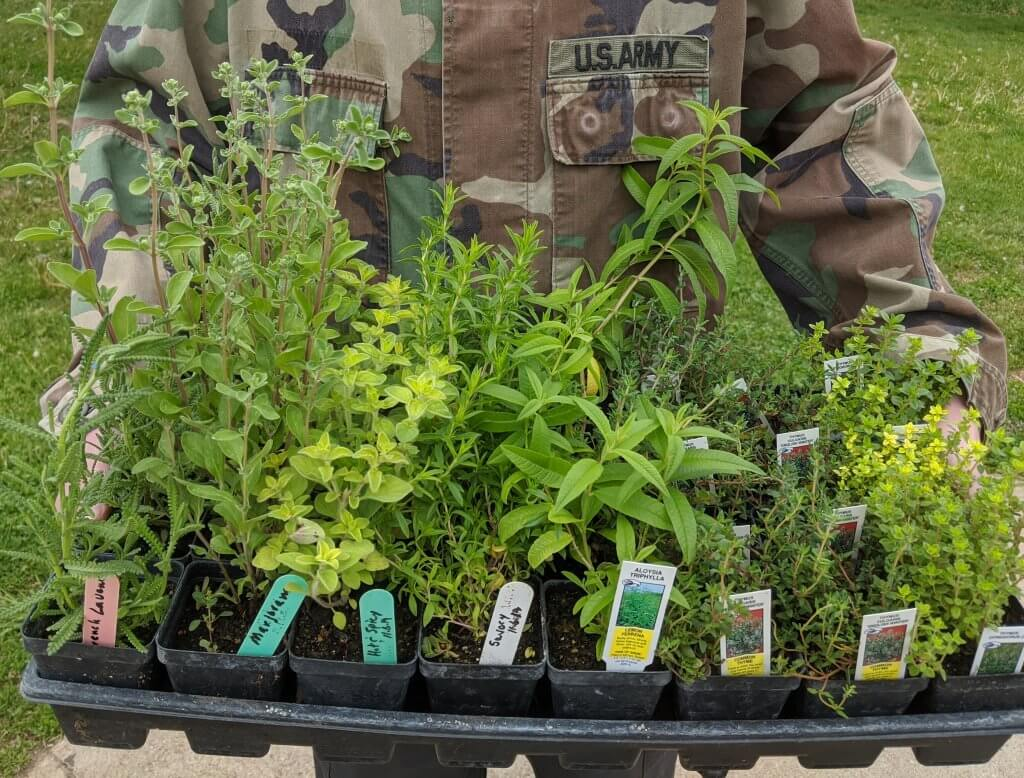 herbs plants in arms