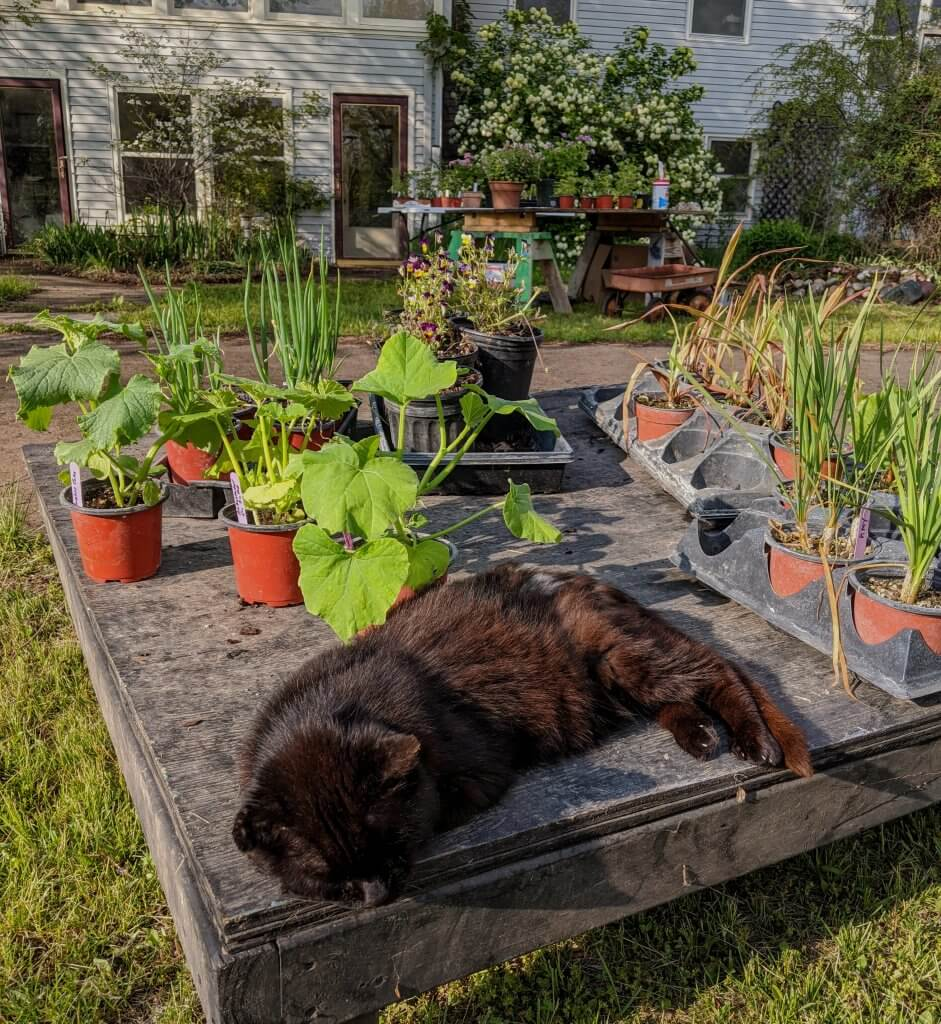 kitty and plants