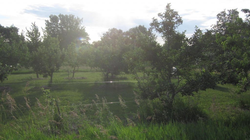 Here's my orchard. Note how nearly-invisible the fence is.