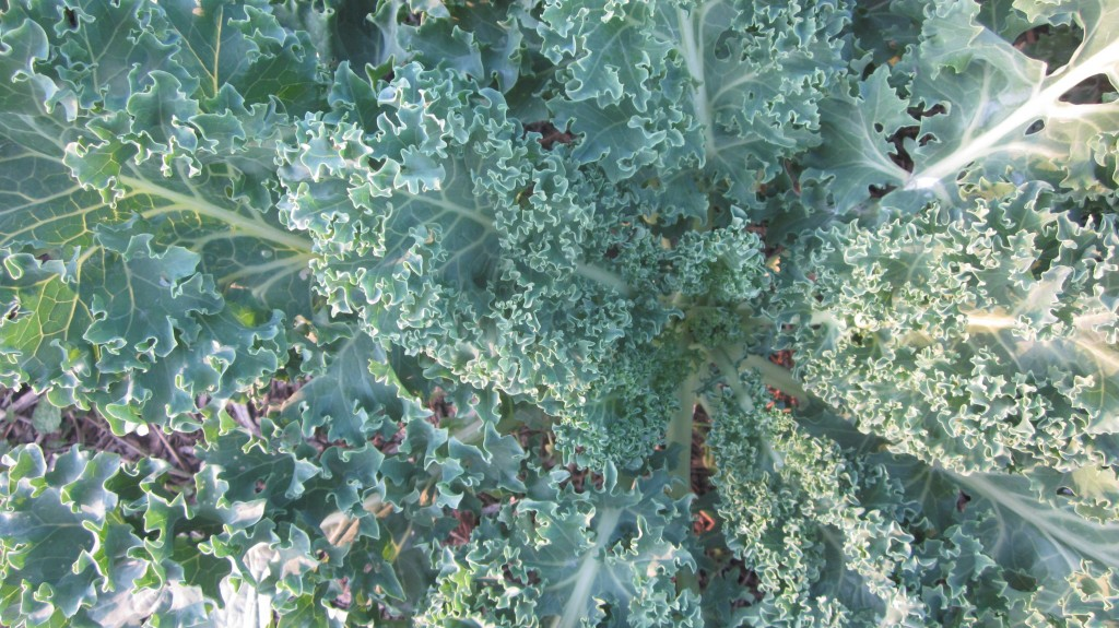 KALE: it's a big deal