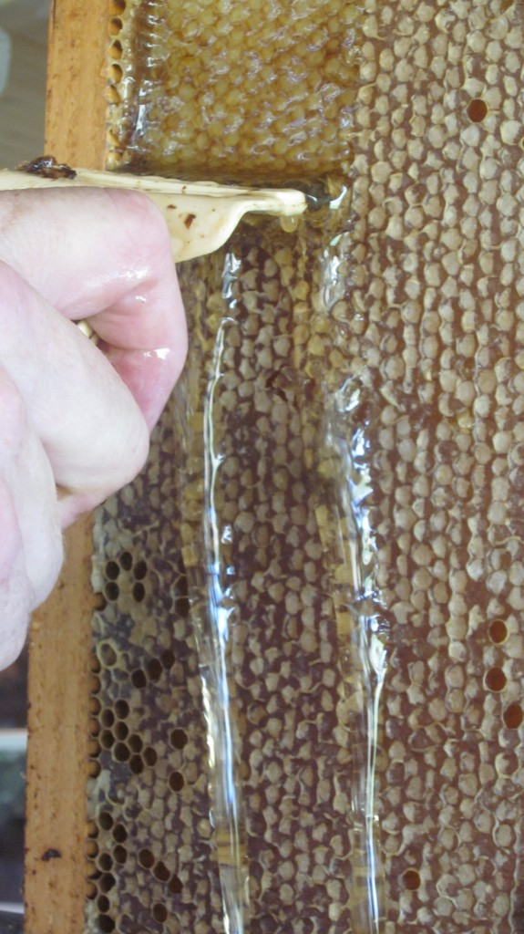 Here's the first super of honey, as Bryan begins to scrape it off its frames. Yum.
