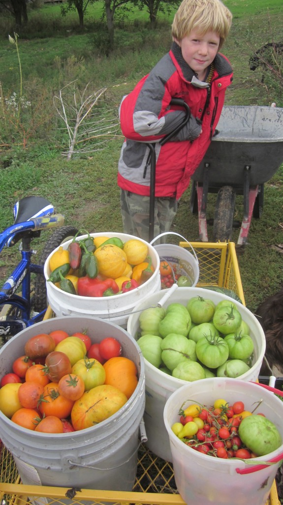 This was our beating-the-first-frost, last tomato harvest in October!
