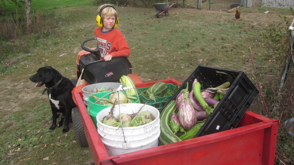 Little Mack got his wish: he was the tractor driver, hauling our goodies back to the house, under Ollie's watchful eye.