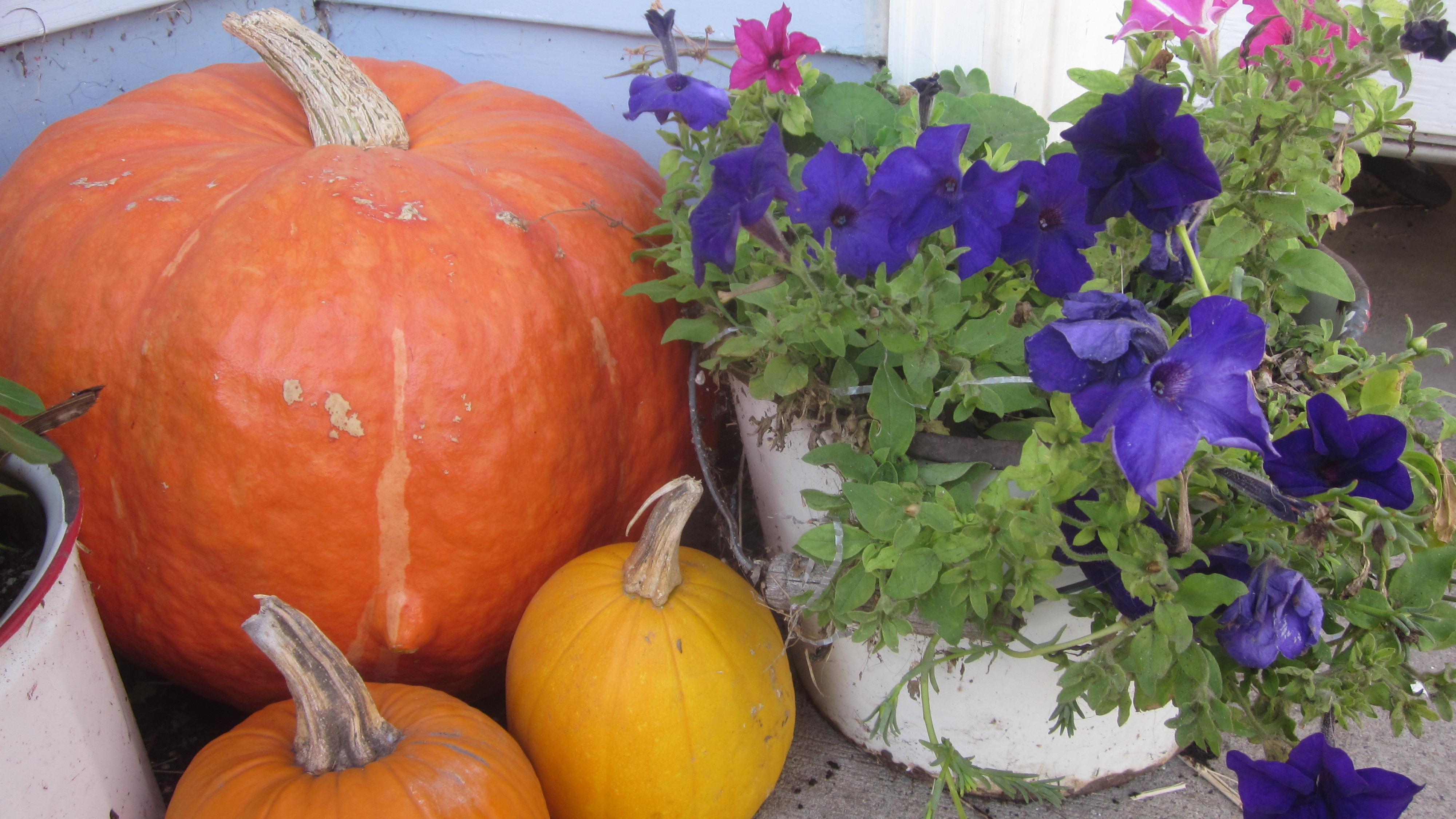 Some pumpkin tomfoolery