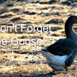 Don't Forget the Goose!