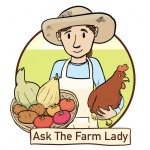 Grow your own garlic = Ask the Farm Lady & flash giveaway!