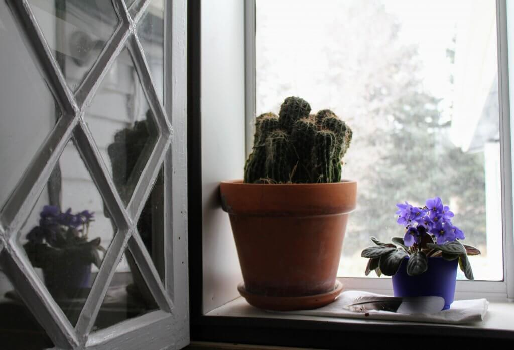 potted plants in window