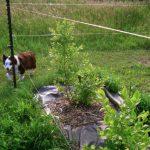 Frank's Brilliant Update to Fishing-Line Deer Fencing