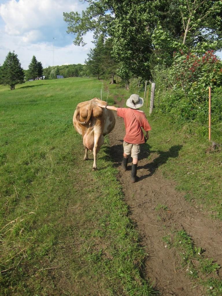 ben9boy&cow