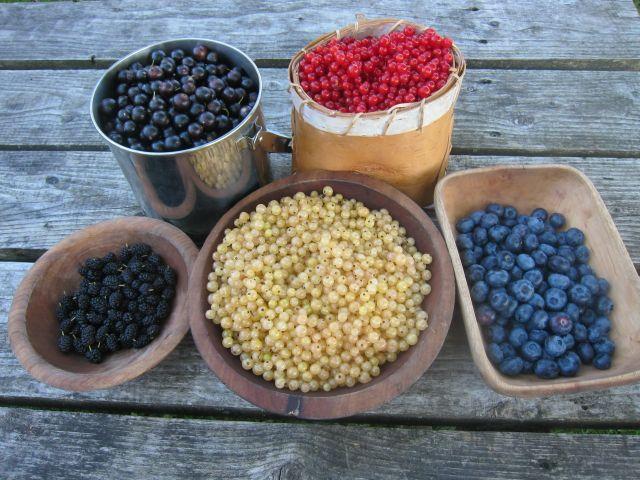 ben'sberries