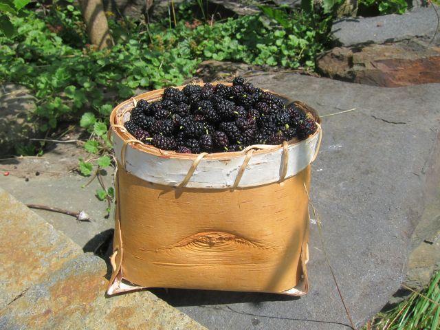 ben'sberries1