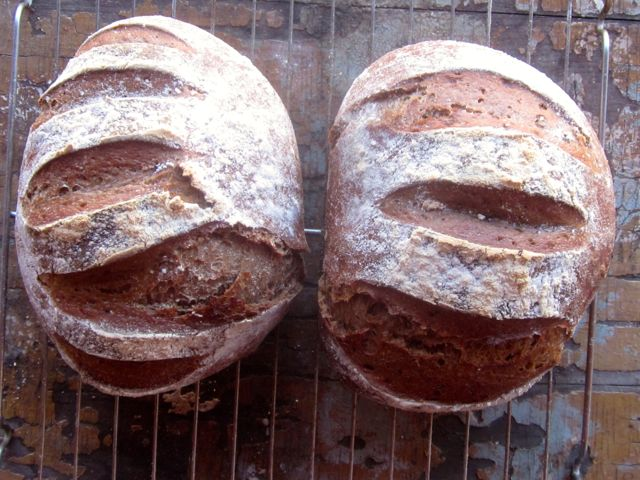 Mocha-Honey Rye bread: I'll share the recipe with you sometime soon: it's so gooooood!
