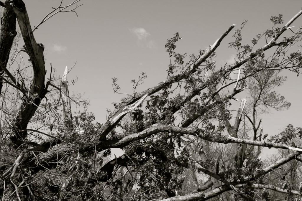 brokentrees