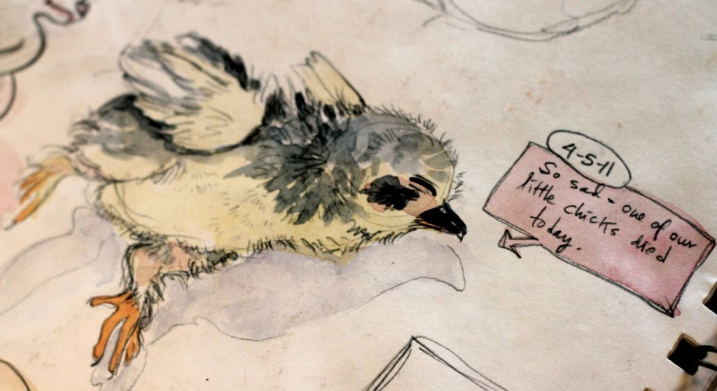 Losing a new chick is always sad; but provides a good excuse to draw the dear little thing.