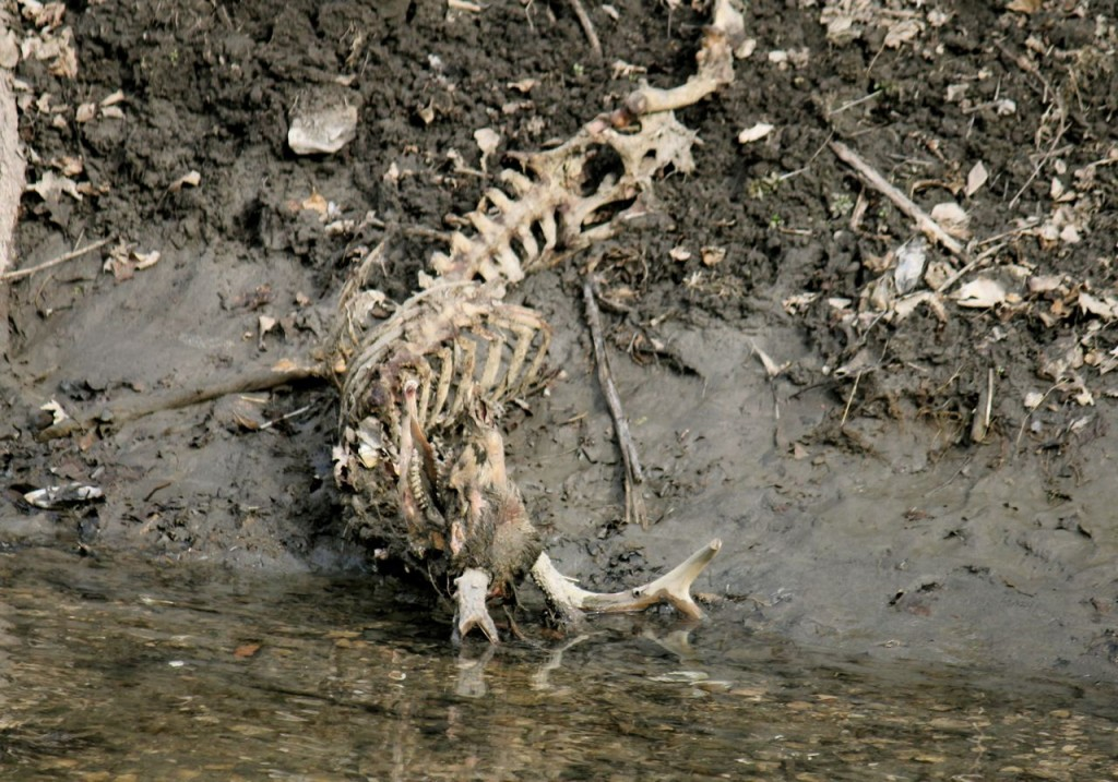 Can you see the antlers, mostly down in the water? I am so going to find a way to rescue this gorgeous skull!
