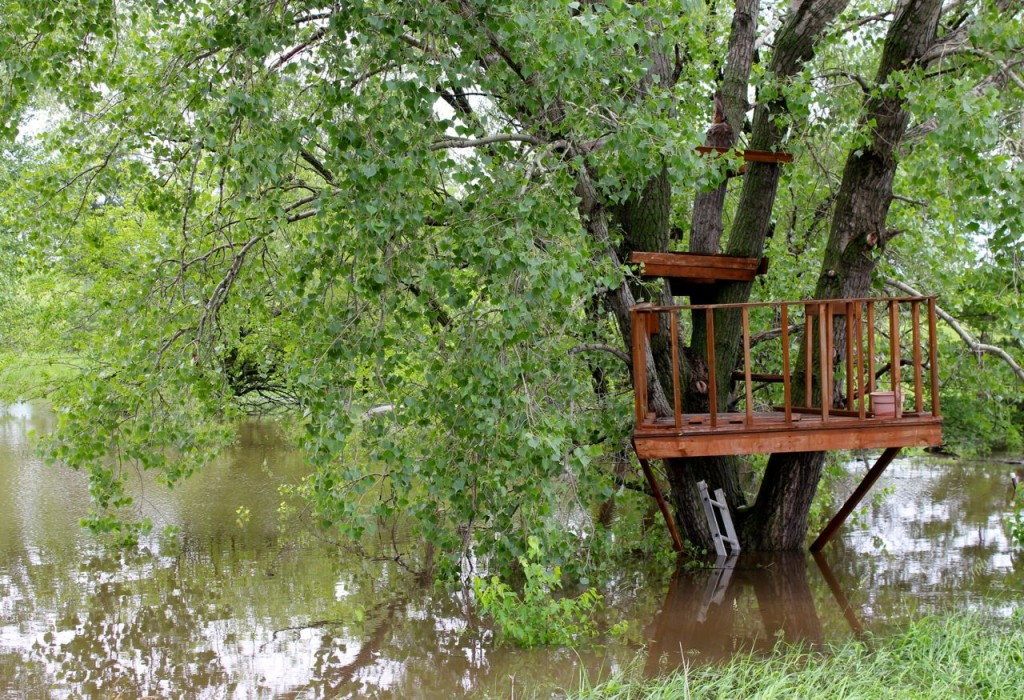 It's a little tricky to get to the treehouse these days.