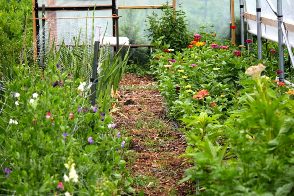 And don't forget the hoop house beds . . .