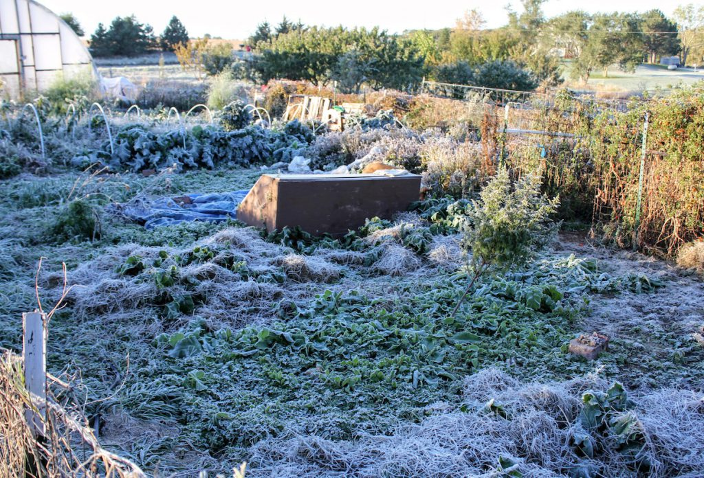 My garden! Decidedly frosted!