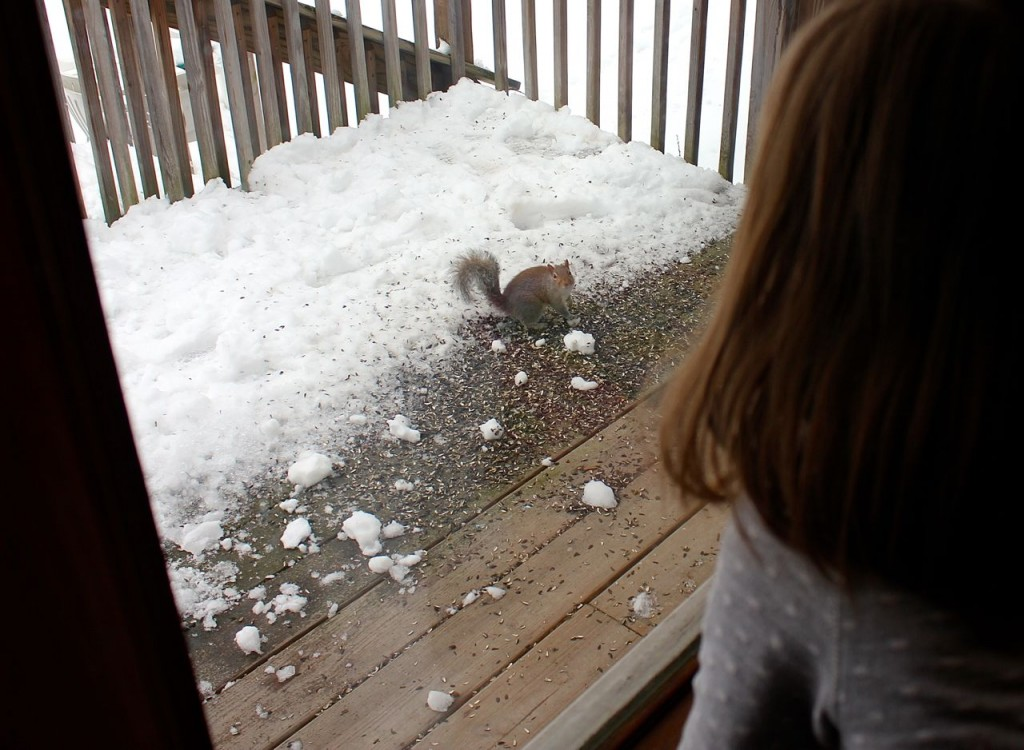 """Anya named this little gray squirrel """"Blurk."""" Or """"Blerk."""" Certainly NOT Richard, is what Mack called him."""