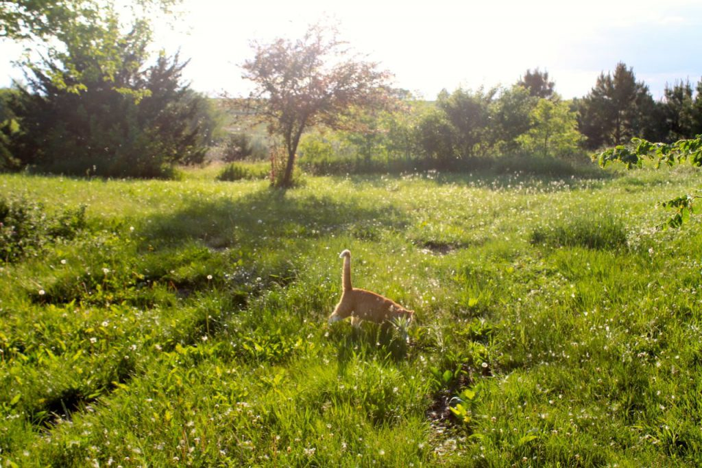 Goldberry loves playing in the backyard at Golden Hour.