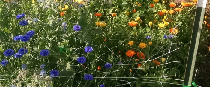 Edible flowers: why, how, what, and wheretofore!