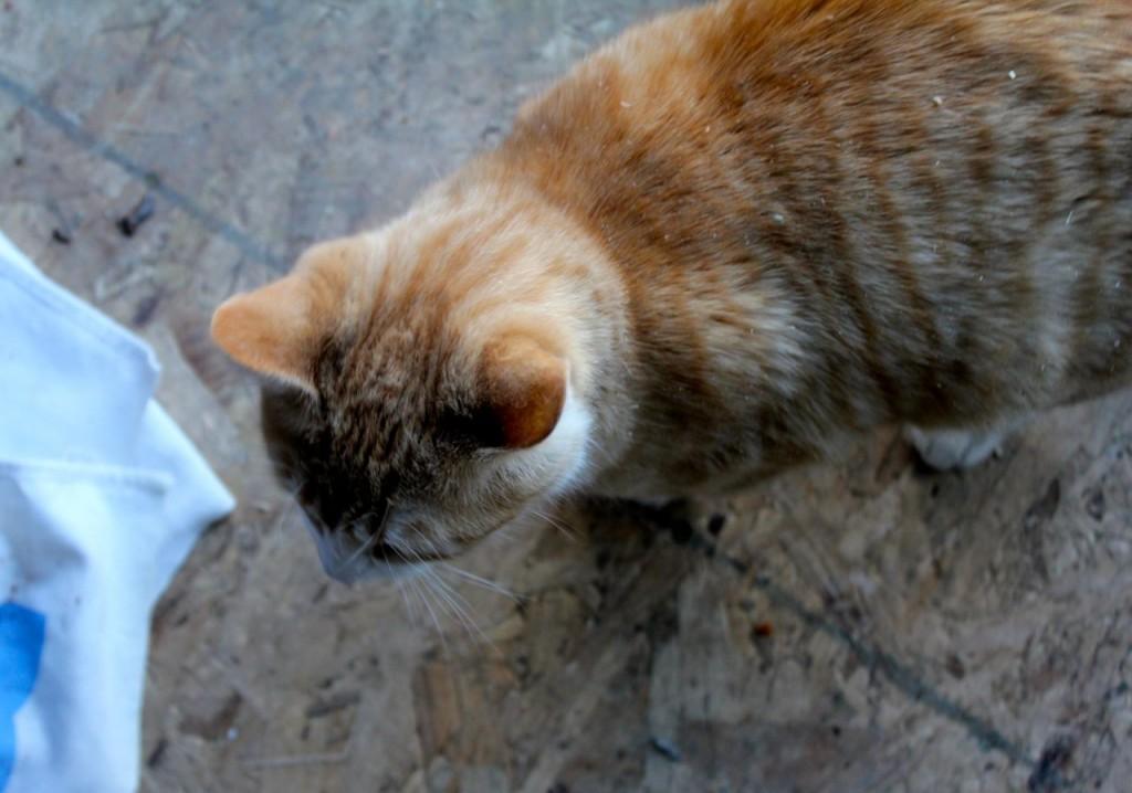 kittydust