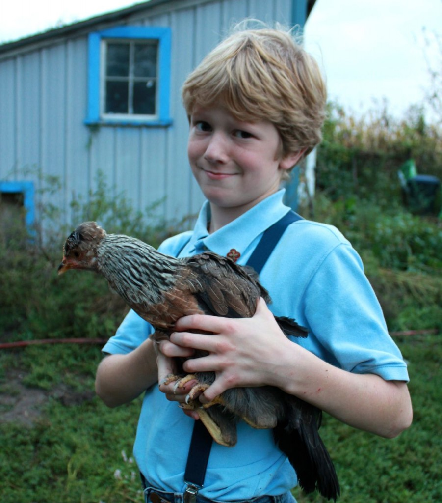 Here's the smart-alek himself, with the fierce little hen Boudica.