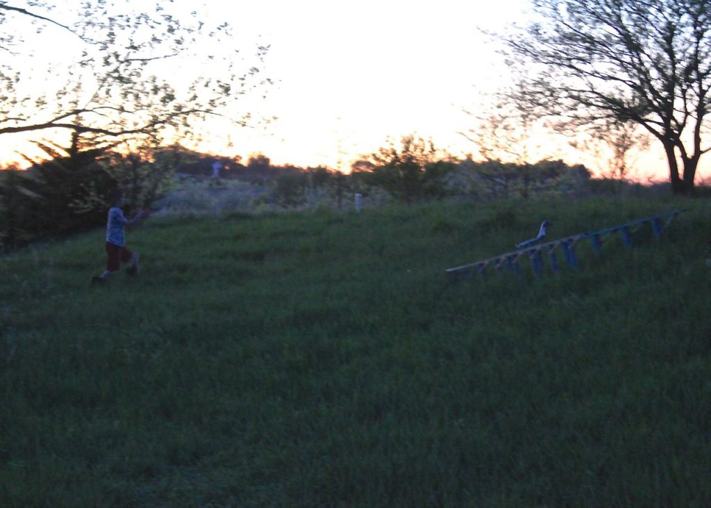 At dusk, Mack helps me coax the ducks up the hill to safety in the coop for the night.