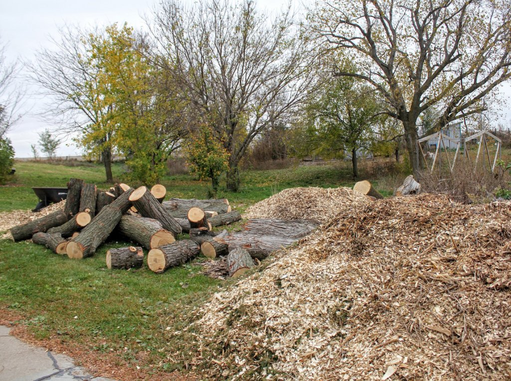 "Here's one thing that is keeping us busy: in one week, I had treetrimmers, friends of mine, dump 3 loads of chips and a load of (uncut) firewood at our place. Such bounty! My thought: ""I must have prayed for woodchips and firewood!"""