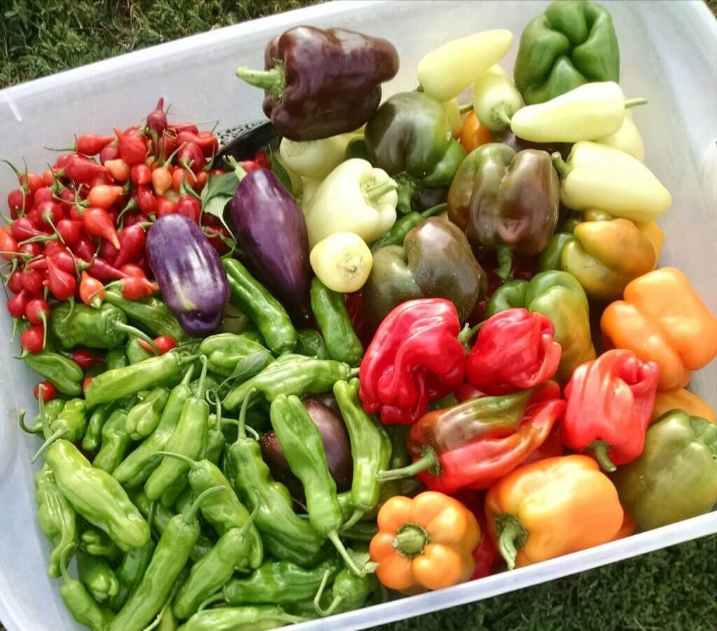 peppers many varieties