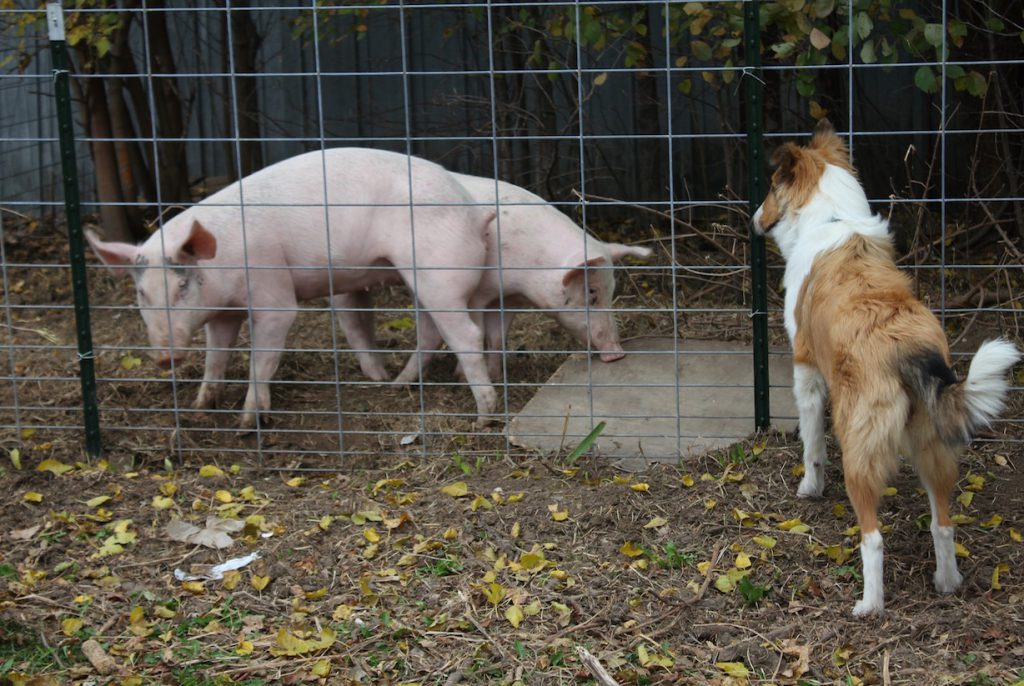 """Scout exercises her authority over Beacan and Chinwigchinpig. """"I'm outside the fence. I am free. You are inside the fence. You are NOT free."""""""